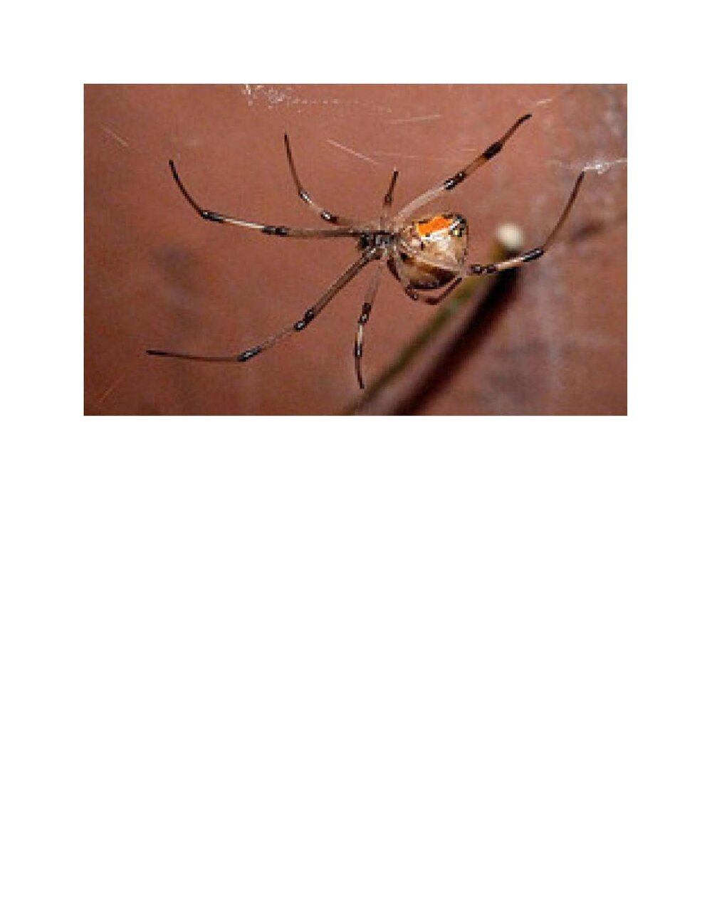 Spider on a Ship.jpg